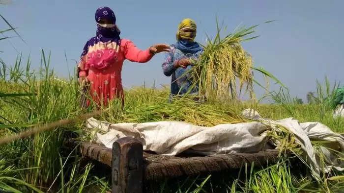 किसानों के लिए मनोहर सरकार का बड़ा ऐलान, जिनका फसल बीमा नहीं उन्हे सरकार अपने खाते से देगी मुआवजा