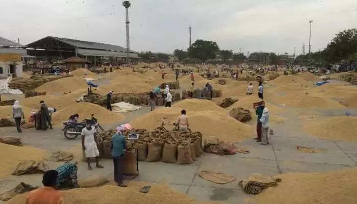 हरियाणा में किसानों के लिए बड़ा ऐलान, फसल खरीद पर देरी से भुगतान हुआ तो मिलेगा 9 फीसदी ब्याज