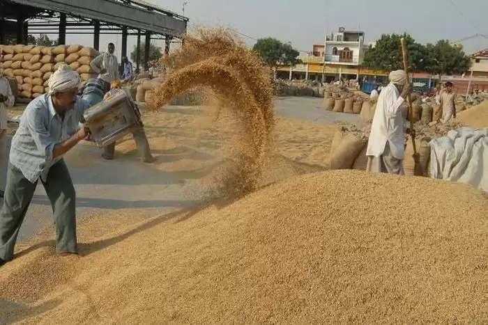 राहत: हरियाणा सरकार ने बदले गेहूं खरीद के नियम, अब बिना मैसेज भी खरीदी जाएगी किसानों की फसल